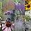 Thumbnail: WILDLIFE PLANT MIX