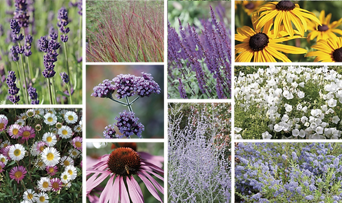 WILDLIFE PLANT MIX