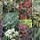 Thumbnail: EVERGREEN PLANT MIX