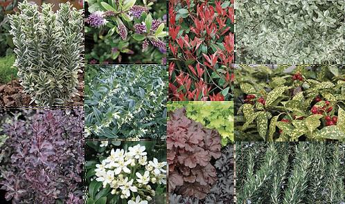 EVERGREEN PLANT MIX
