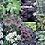 Thumbnail: SHADE TOLERANT PLANT MIX