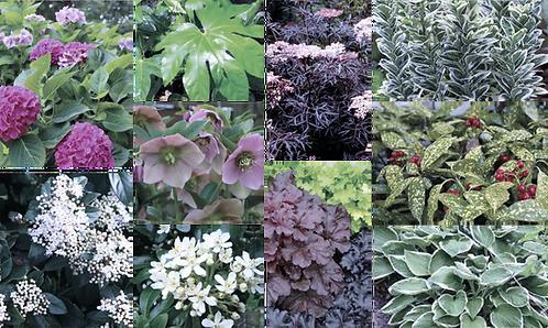 SHADE TOLERANT PLANT MIX