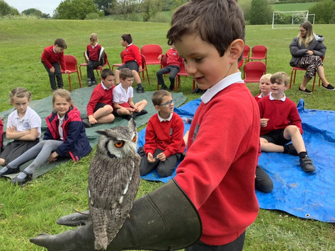 Wye Valley Falconry Visit