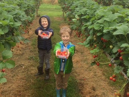 Class 2 Trip to Clive's Fruit Farm