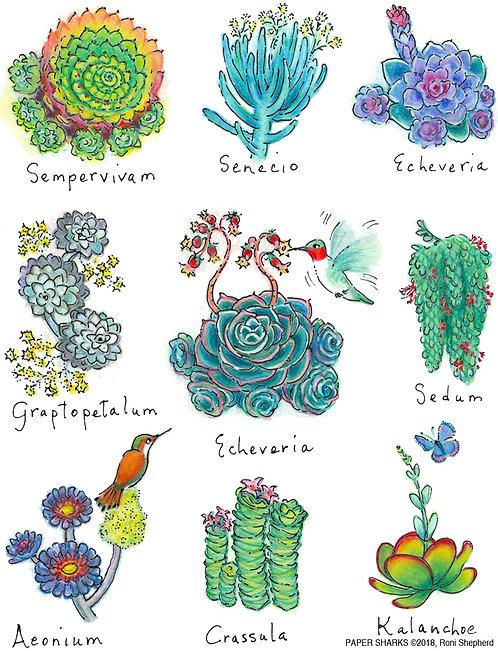 RS165 Succulents Apron