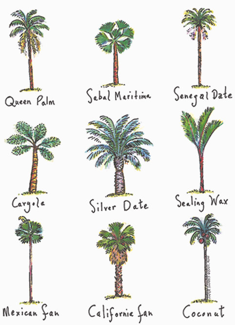 RS807  Palm Trees