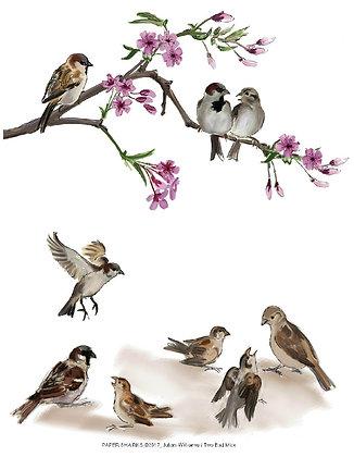 JW210 Sparrows Apron