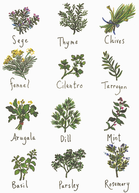 RS104  Herbs