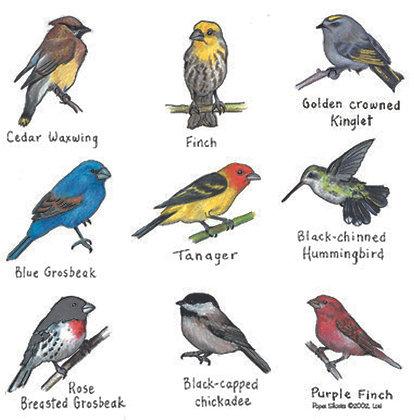 LW104  Birds