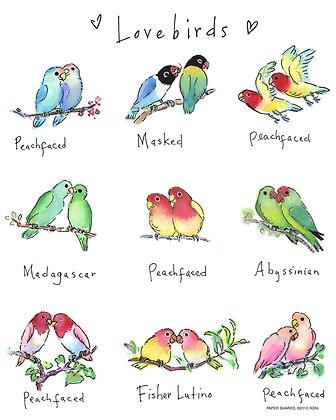 RS123  Lovebirds Apron