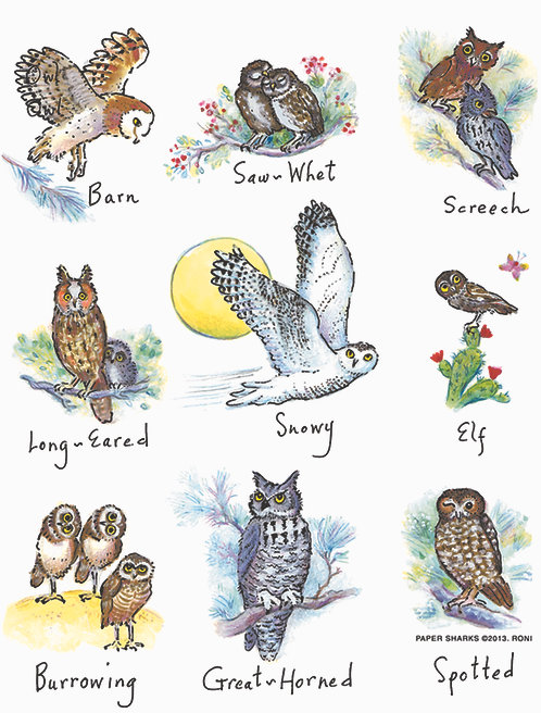 RS140  Owls