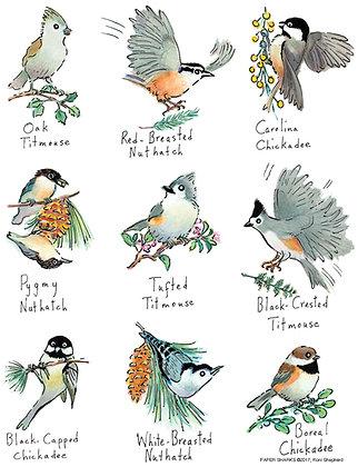 RS163 Little Birds