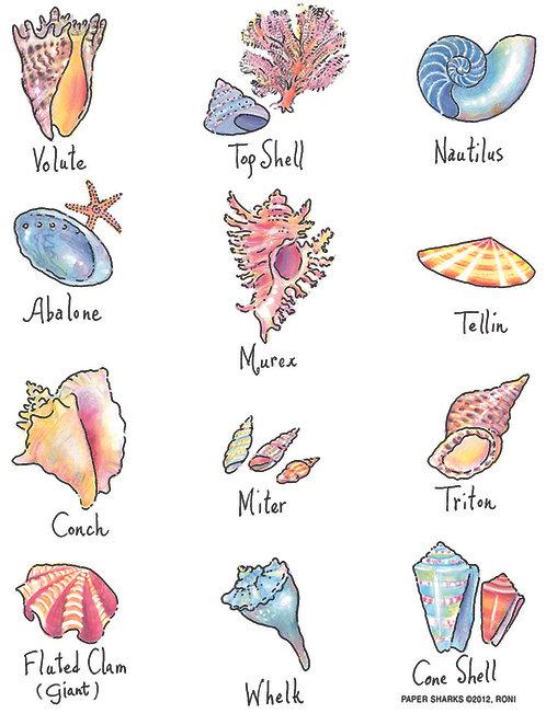 RS135  Shells
