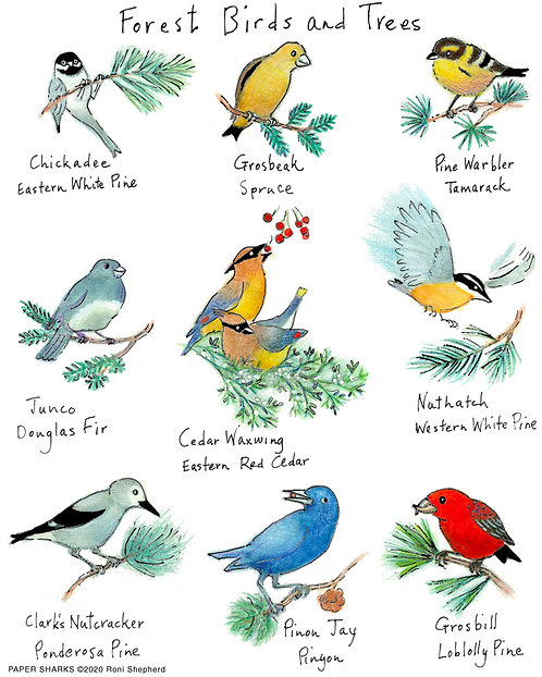 RS179 Forest Birds & Trees