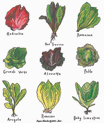 LW101  Salad (lettuce) Apron
