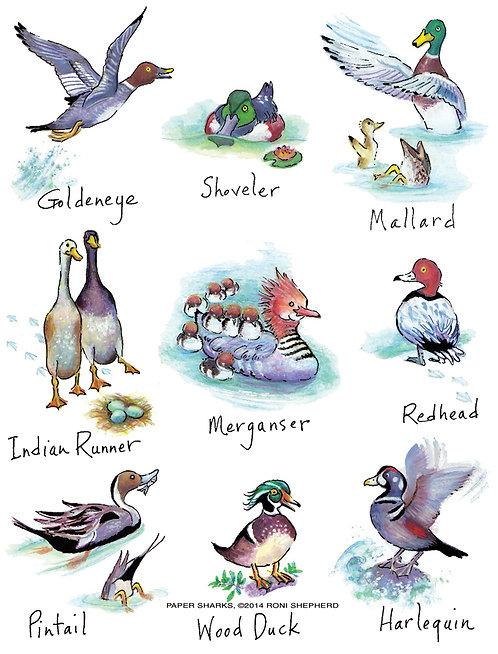RS153  New Ducks Apron