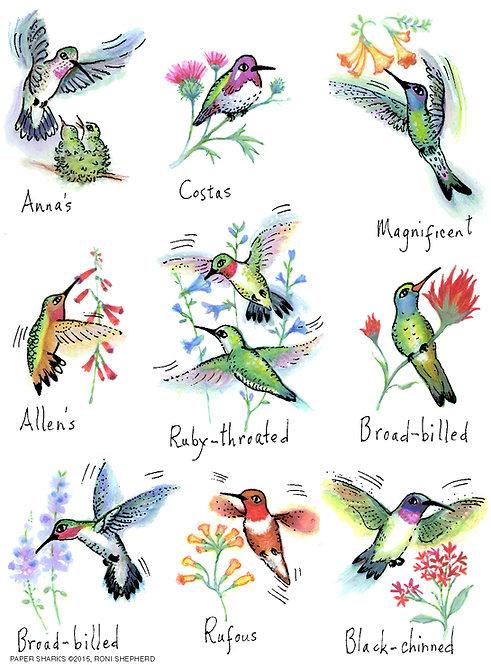 RS155  Hummingbirds 2
