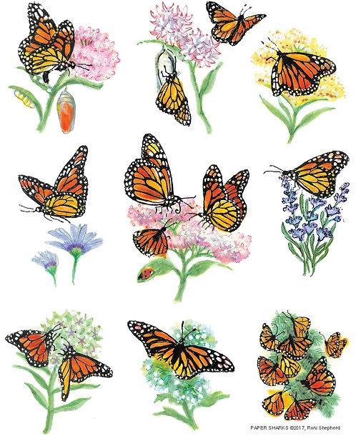 RS162 Monarchs