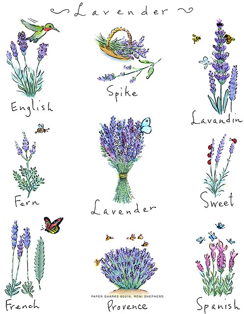 RS326 Lavender