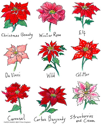 RS499 Poinsettias Variety Apron