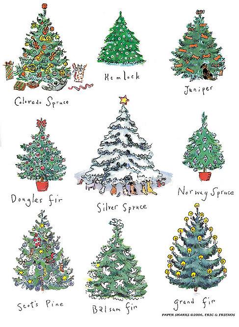 RS444  Christmas Trees