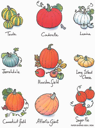 RA114  Pumpkins