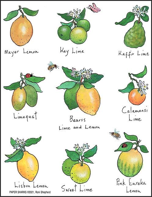 RS186 Limes & Lemons