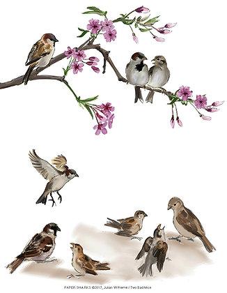 JW210 Sparrows