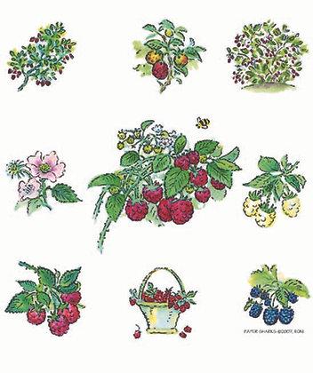 RS303 Raspberries