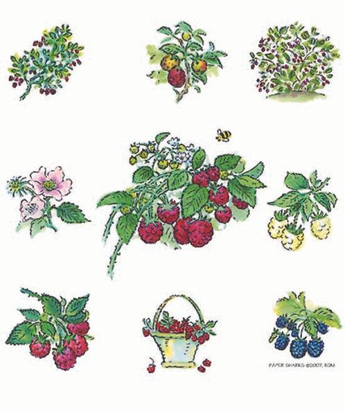 RS303 Raspberries Apron