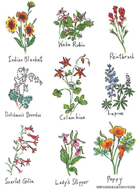 RS116  Wildflowers
