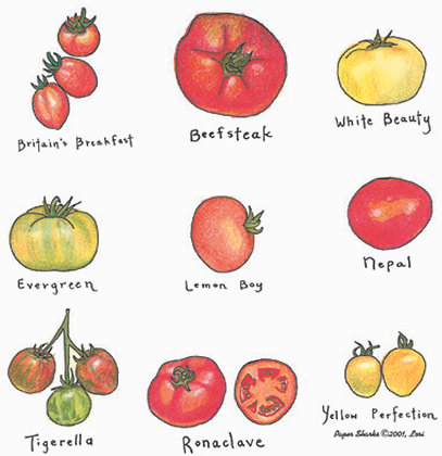 LW102  Tomatoes Apron