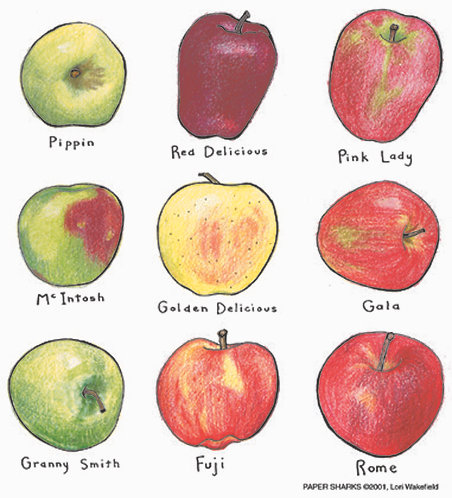 LW103  Apples Apron
