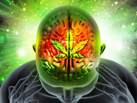 CBD and Your Brain