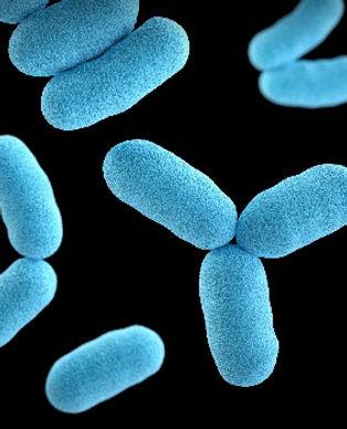 bacteria-omg-facts.jpg