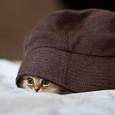 A Living Hat