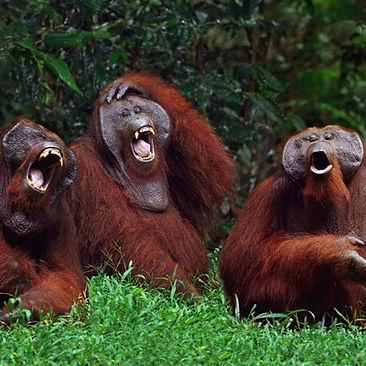 Can Animals Laugh