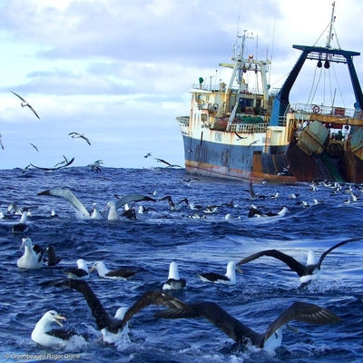 Why Do Large Seabirds Love To Fly Behind Ships