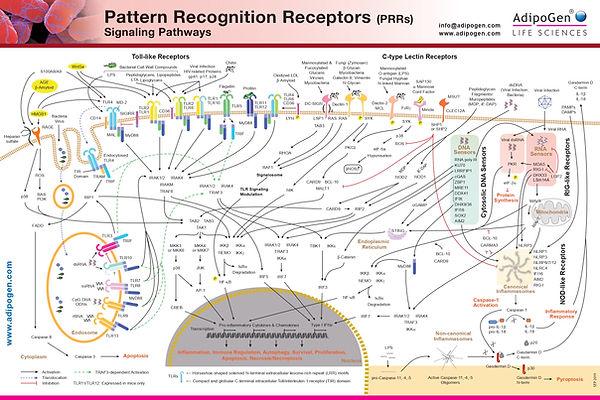 Wallchart_Adipogen_PRR_Pattern_Recogniti