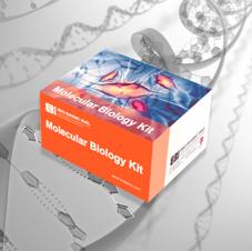 Molecular Biology Kits