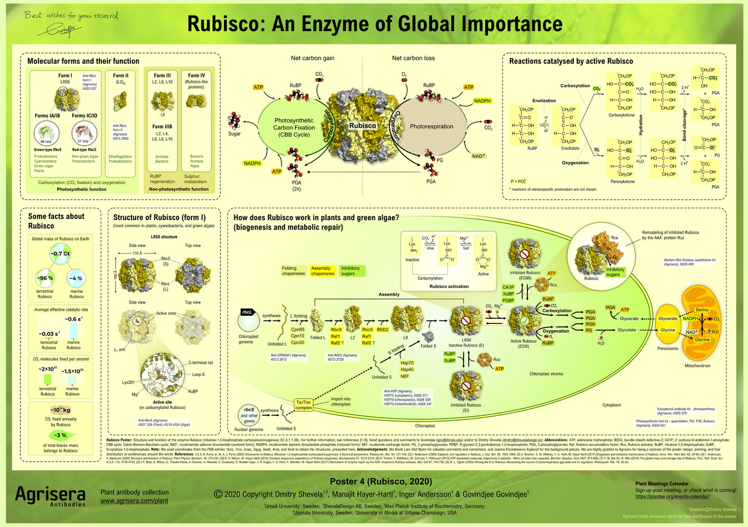 Agrisera-Poster-4-Rubisco-An-Enzyme-of-G