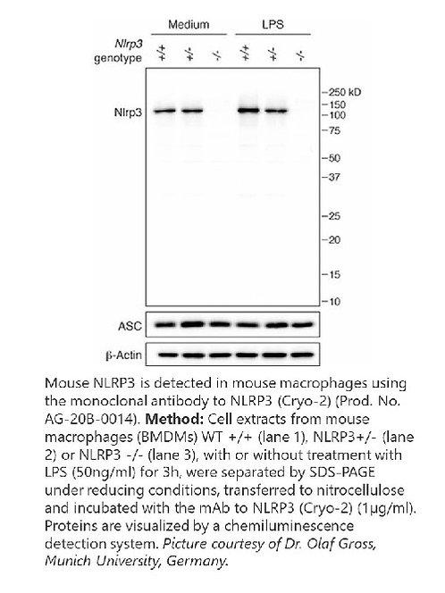 anti-NLRP3/NALP3, mAb (Cryo-2)  100 µg