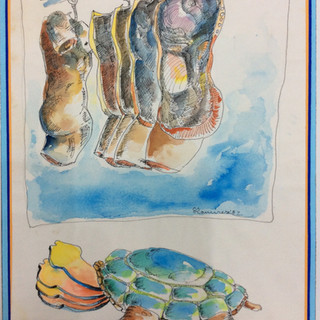 """""""The Turtle"""""""