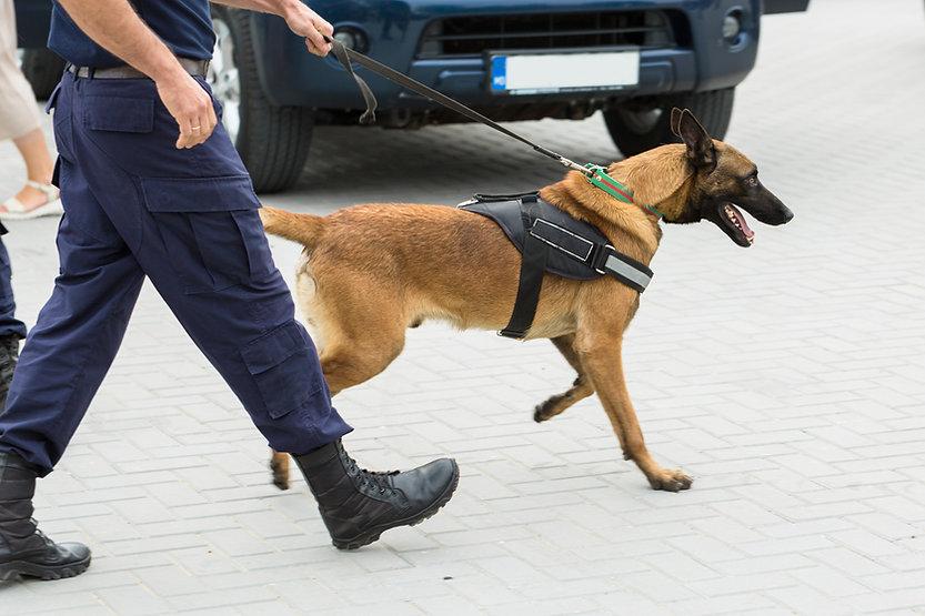 malinois-belgian-shepherd-guard-border-border-troops-demonstrate-dogs-ability.jpg