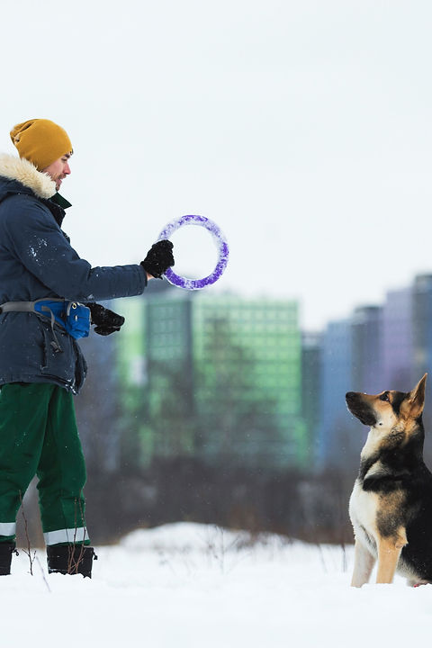 man-playing-with-german-shepherd-park-winter_edited.jpg