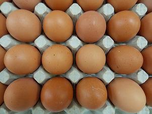 Chicken - Eggs
