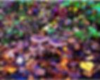 IMG_5078_edited.jpg