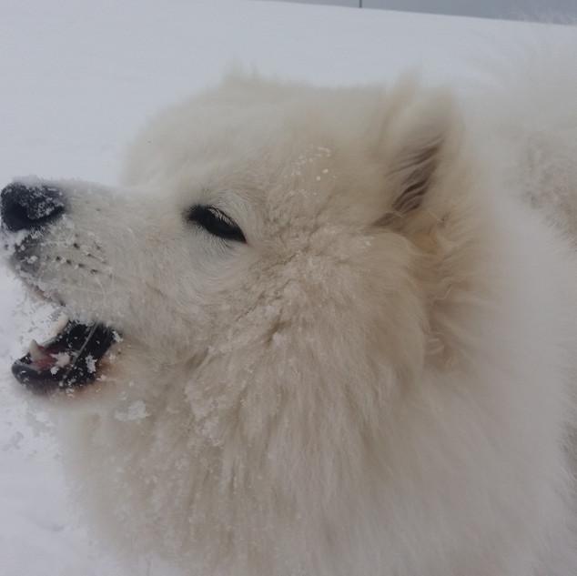 Pyszny śnieg