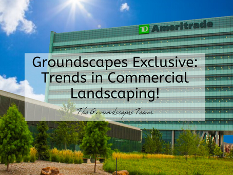 Groundscapes Exclusive: Trends in Commercial Landscaping!