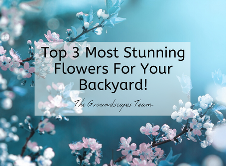 The Top 3 Most Stunning Flowers For Your Backyard!